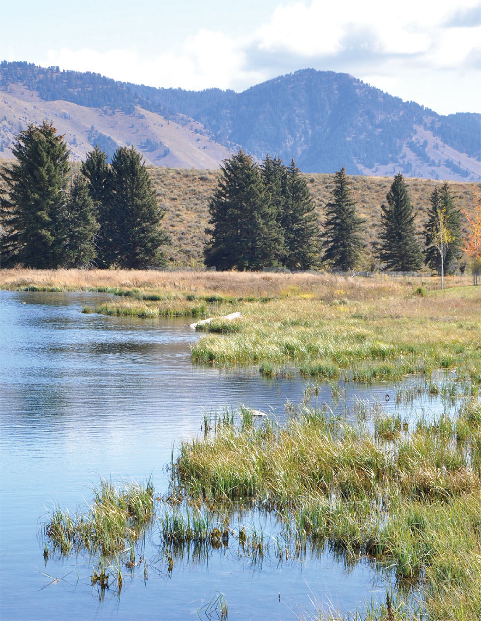 CLEARWATER RESTORATION- Jackson Hole Pond