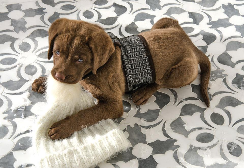 Beyond Tile- Park City Puppy